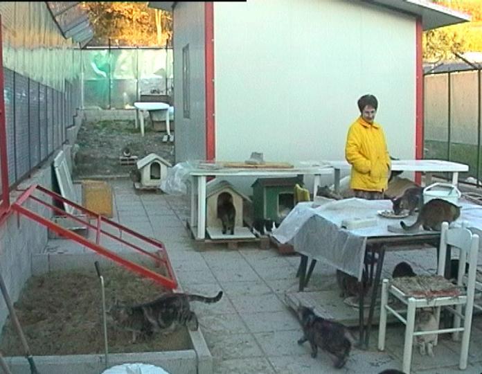 Magnifico gattile bagno a ripoli l arredamento e la
