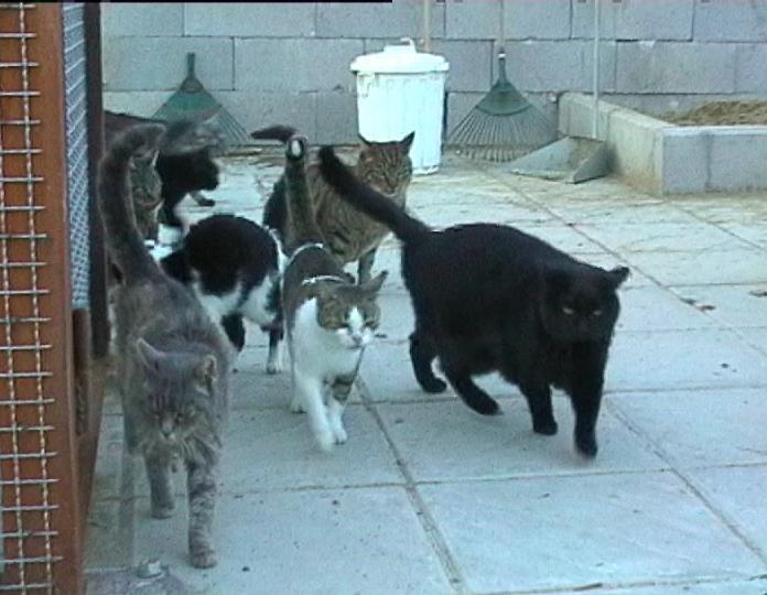 Gattile bagno a ripoli nuovo the cats and culture tour was a