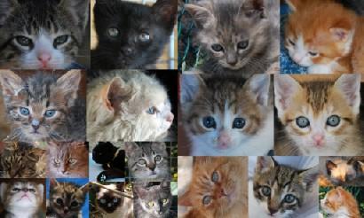Passioncats adottati gattile di empoli al collasso tra almeno